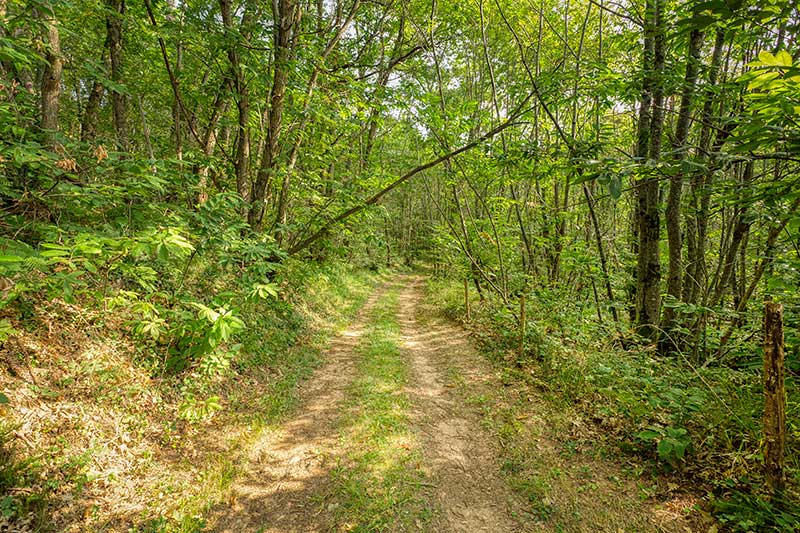 Forêt du Domaine de Bonaguil - Vin IGP Côtes du Lot
